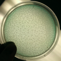 Earth as a Petri Dish: The Problem of Growth